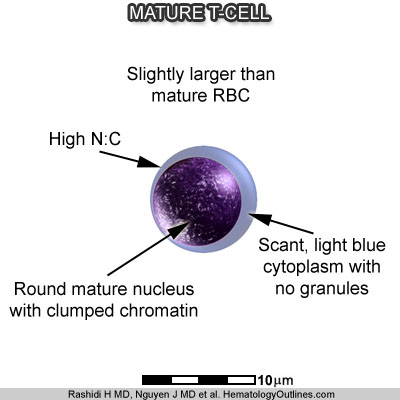T cells mature in the